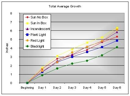 Seed Growth Dennis Yong Sed695b4